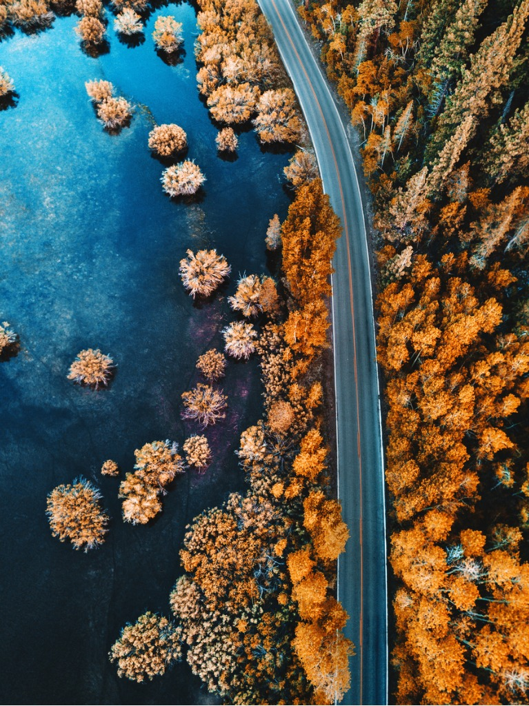 helicopter view of the pine forest along a lake picture id696737248 image
