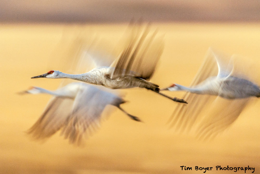 how to photograph birds image