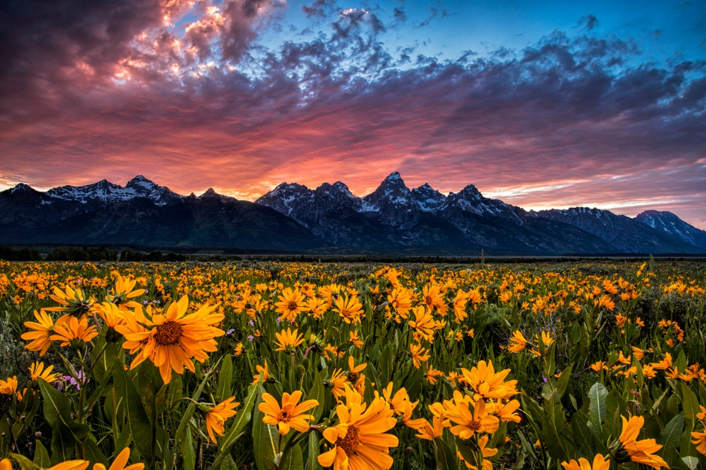 tetons and wildflowers at sunset picture id500333320 image
