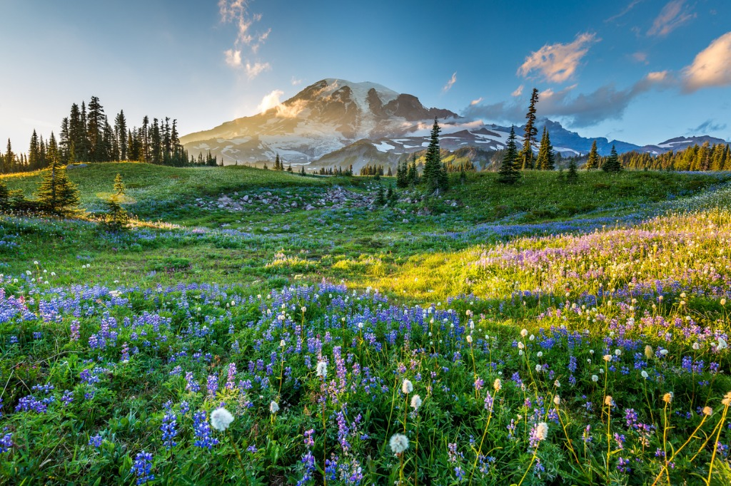 wild flowers in the grass on a background of mountains picture id613758084 image