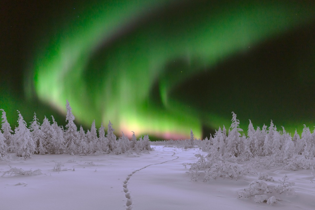 winter night landscape with forest and polar northern lights picture id622196656 image
