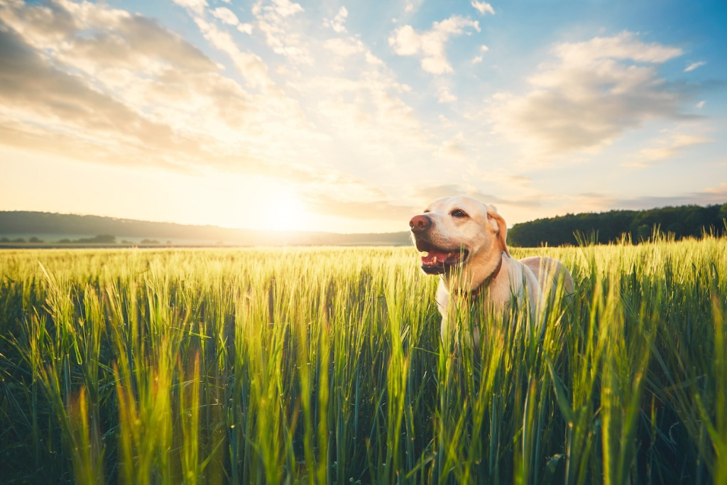 dog on the field at the sunrise picture id695975654 image
