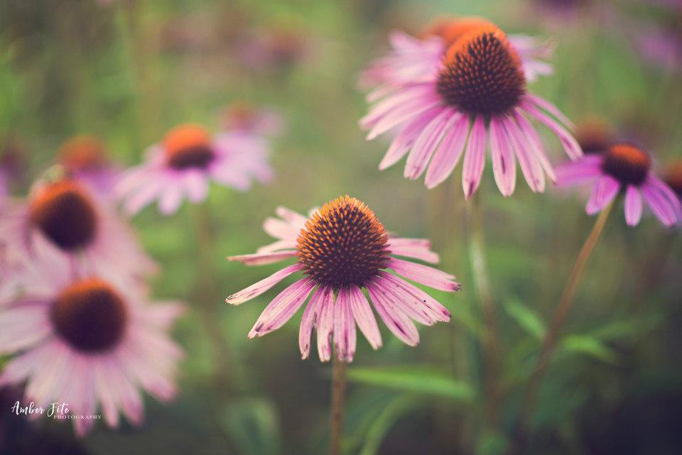 beautiful flower photos image