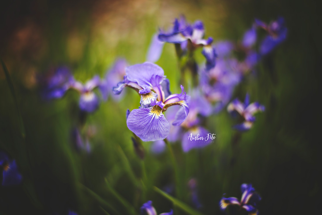 how to photograph flowers image