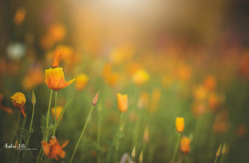 tips for taking photos of flowers image