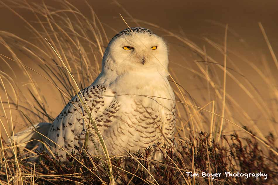 essential bird photography tips image