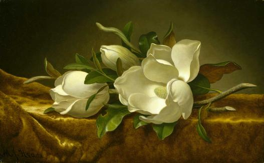Magnolias on gold velvet cloth Martin Johnson Heade image
