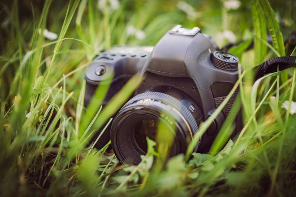 camera in the grass picture id688303520 image