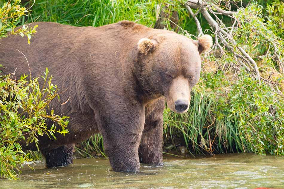 how to photograph bears image
