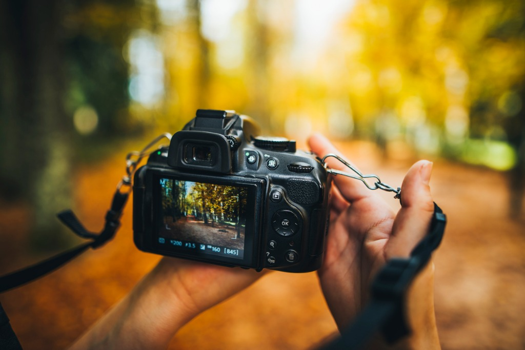 camera capturing a forest picture id618066222 image