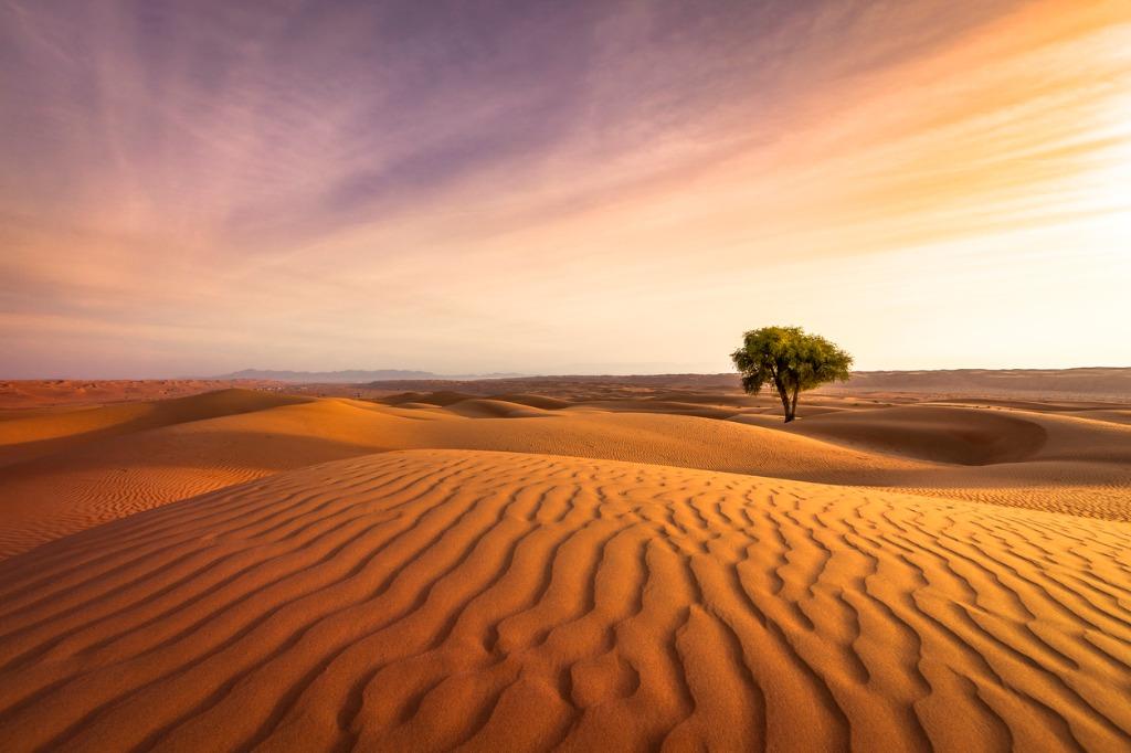 desert sunset picture id658653498 image