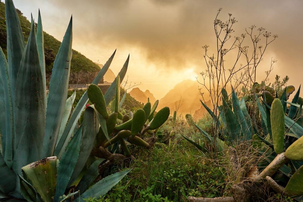 arid vegetation in tenerife picture id911306844 image