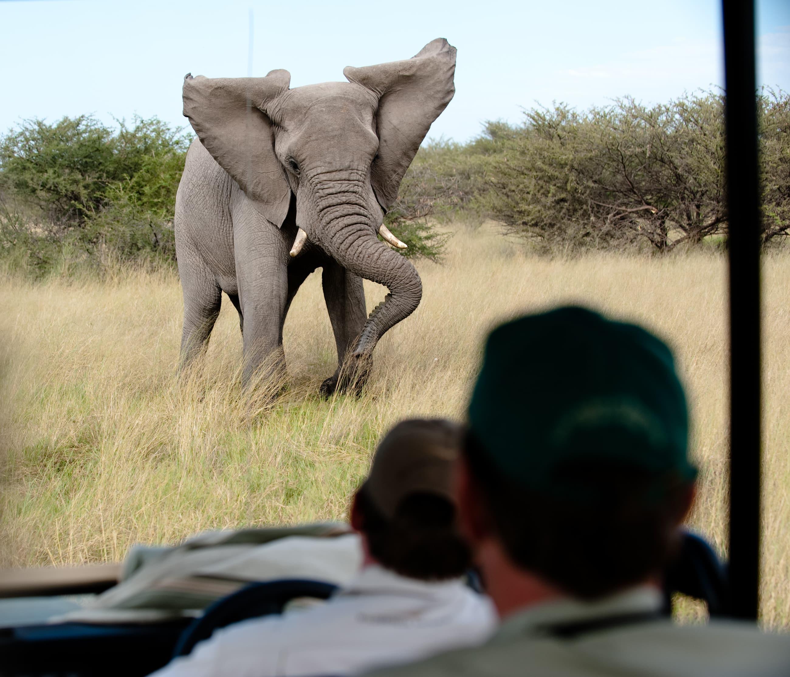 elephant tramples tourist image