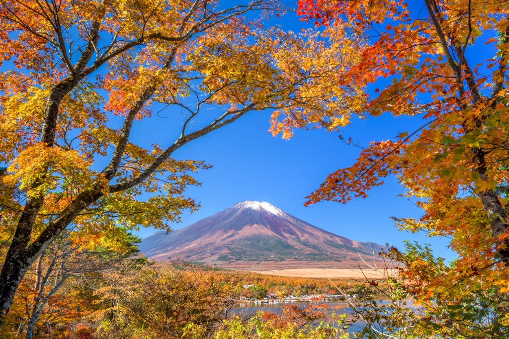 mt fuji in autumn picture id499428190 image