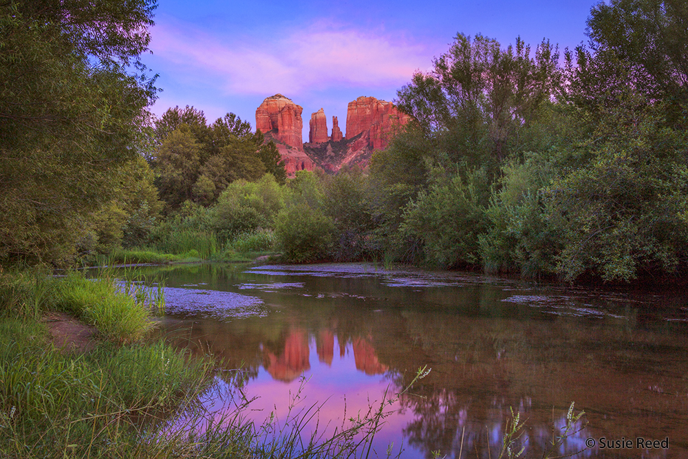 cathedral pink reflection 5109 20 susie reed image