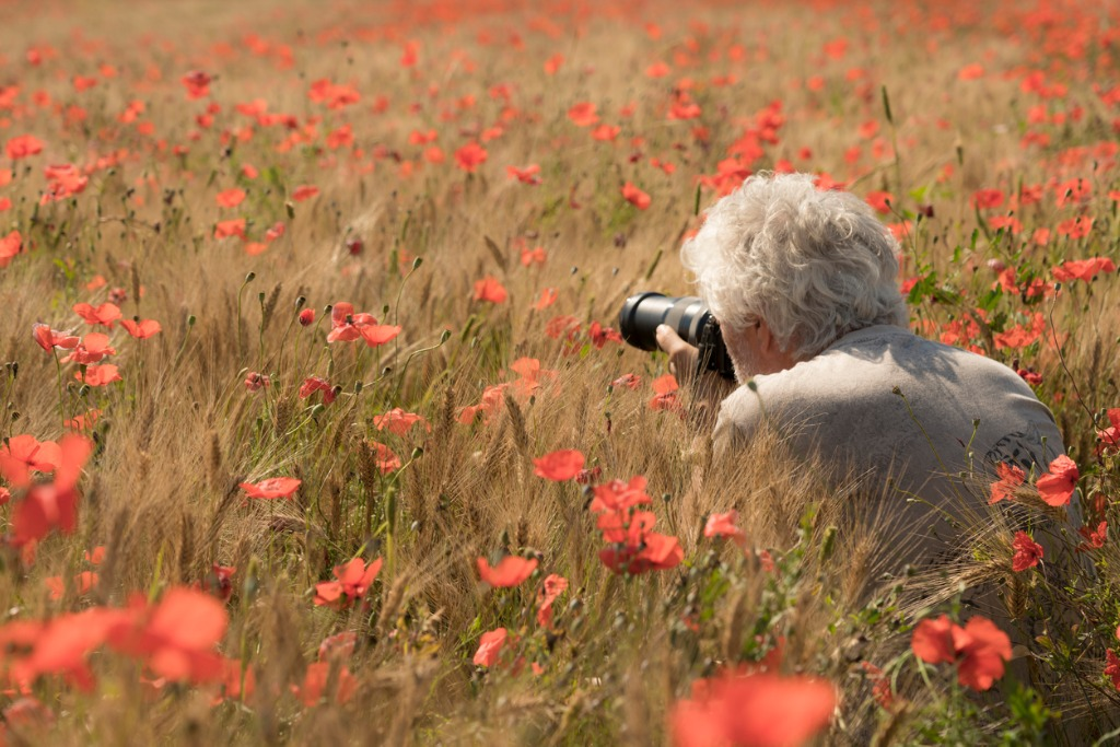 senior men photographing poppy flowers picture id1055216176 image