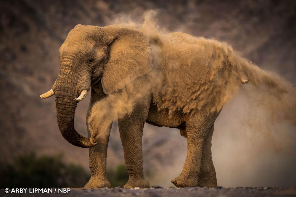 WinnerAfricanWildlife ArbyLipman ElephantDustbath image