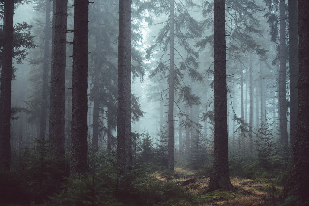 how to photograph fog image