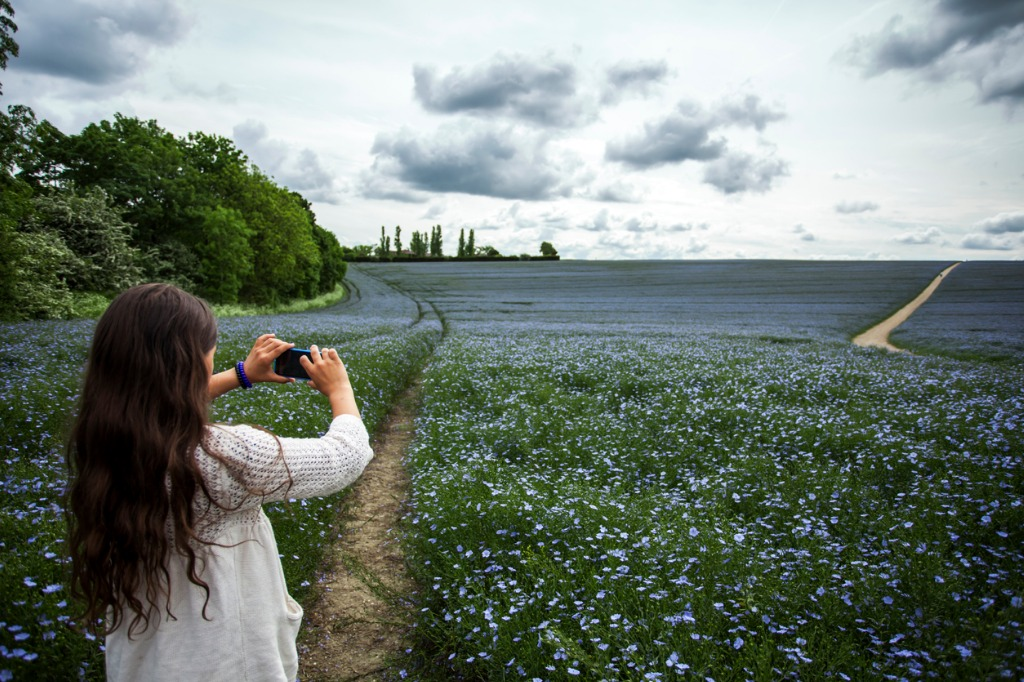 teenage girl taking picture of flax field with smartphone picture id539463588 image