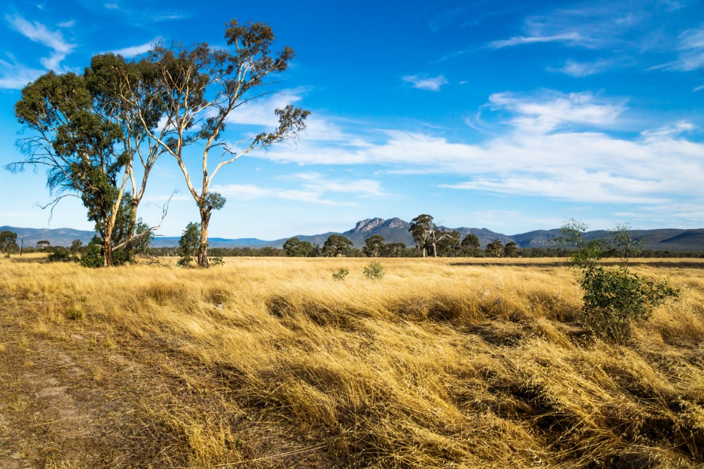 grassland landscape in the bush with grampians mountains in the picture id934906920 image