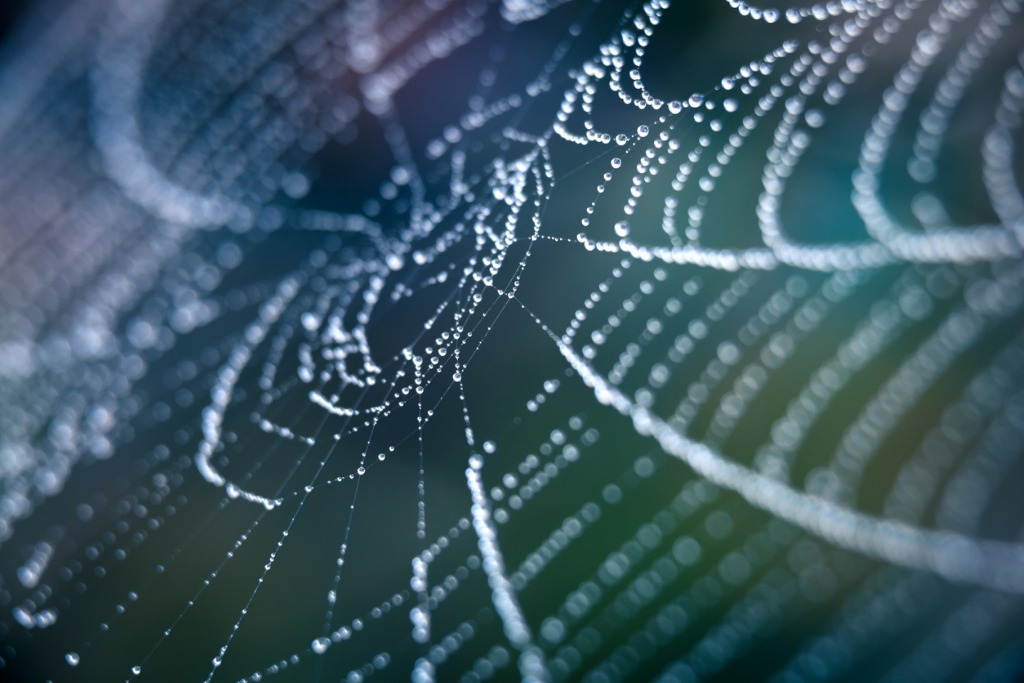 extreme closeup spiderweb with dew picture id155381323 image