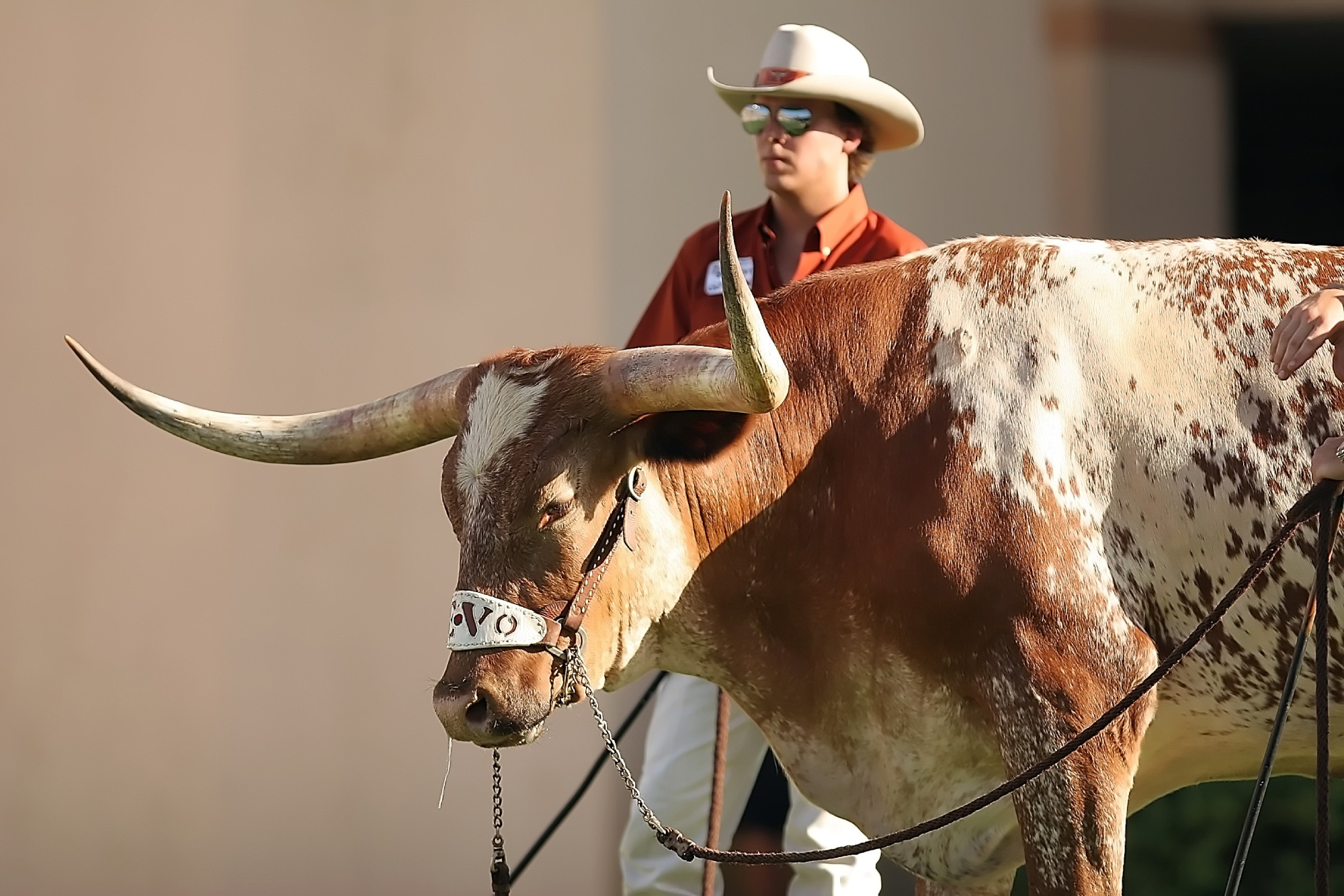 texas mascot charges photographers image