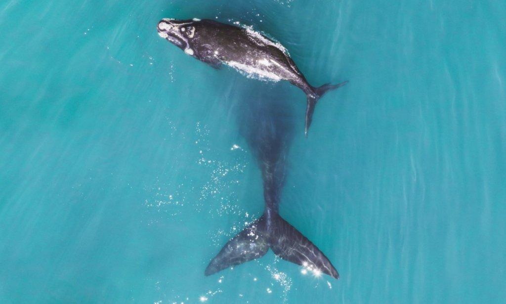 humpback whale photos image