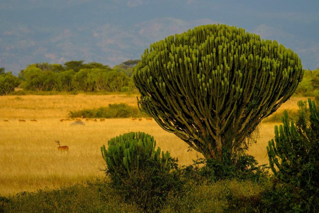 uganda park image