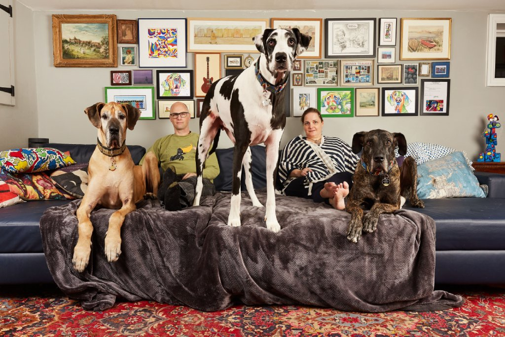 great danes image