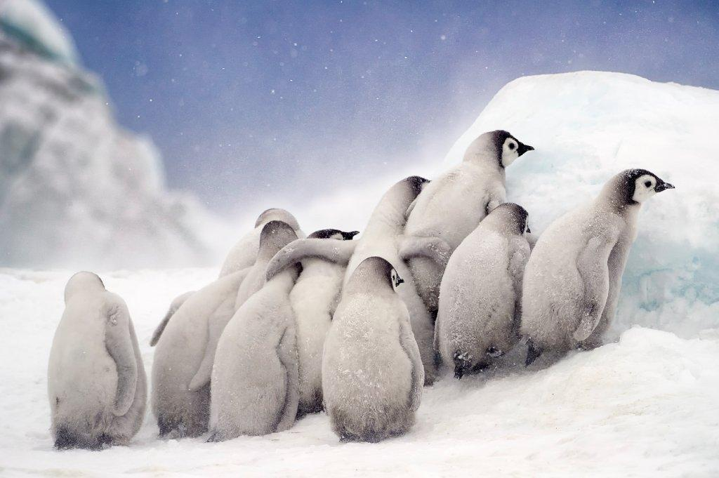 baby penguins image