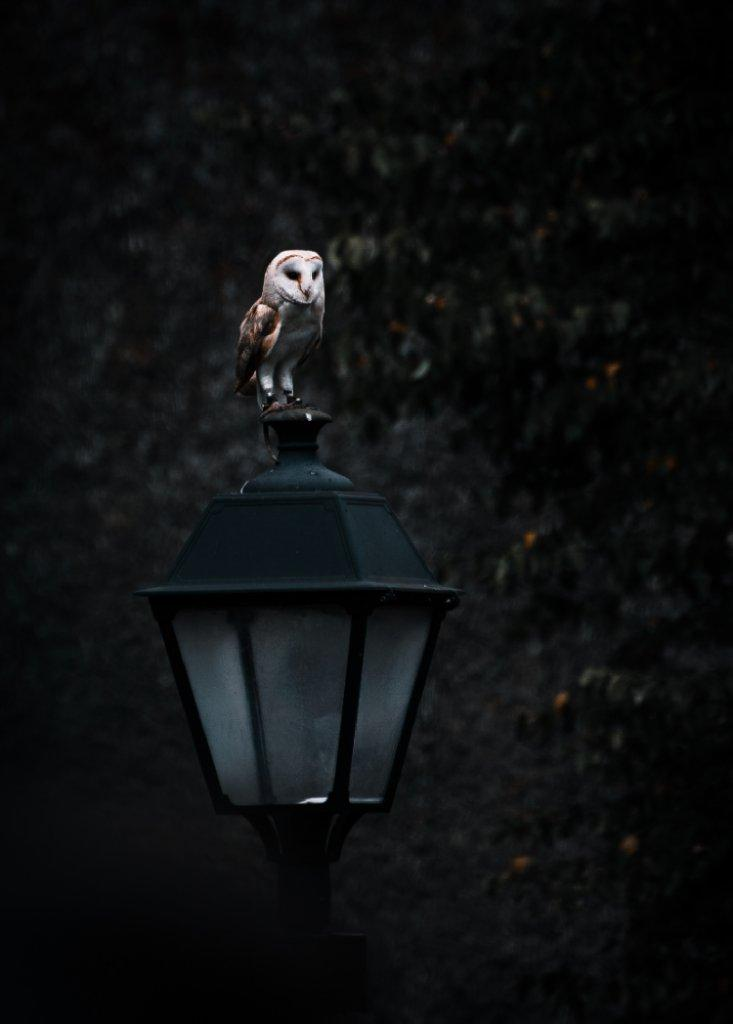 harry potter owl image