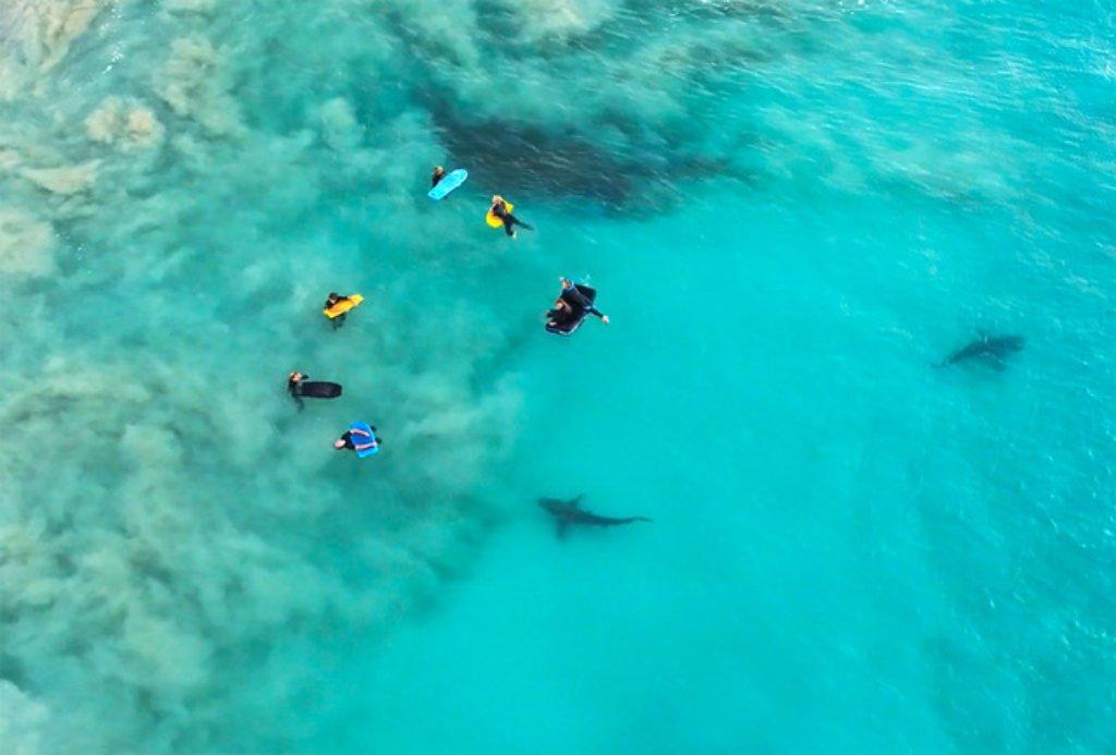 shark week image