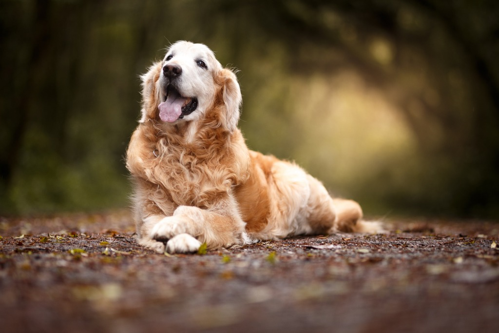 beautiful dog lying in the forest picture id1052880600 image