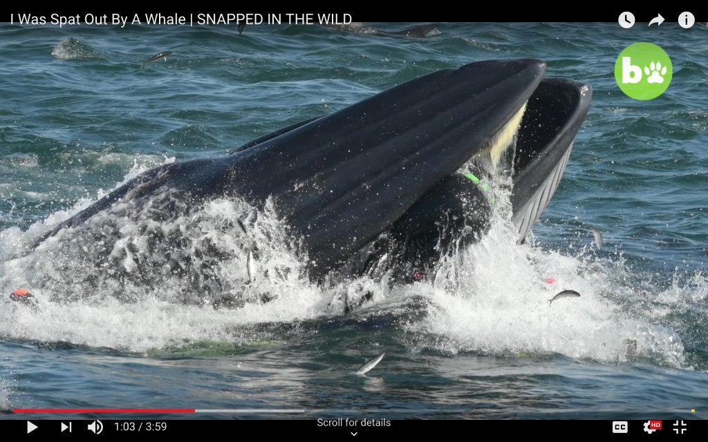 do whales eat people image
