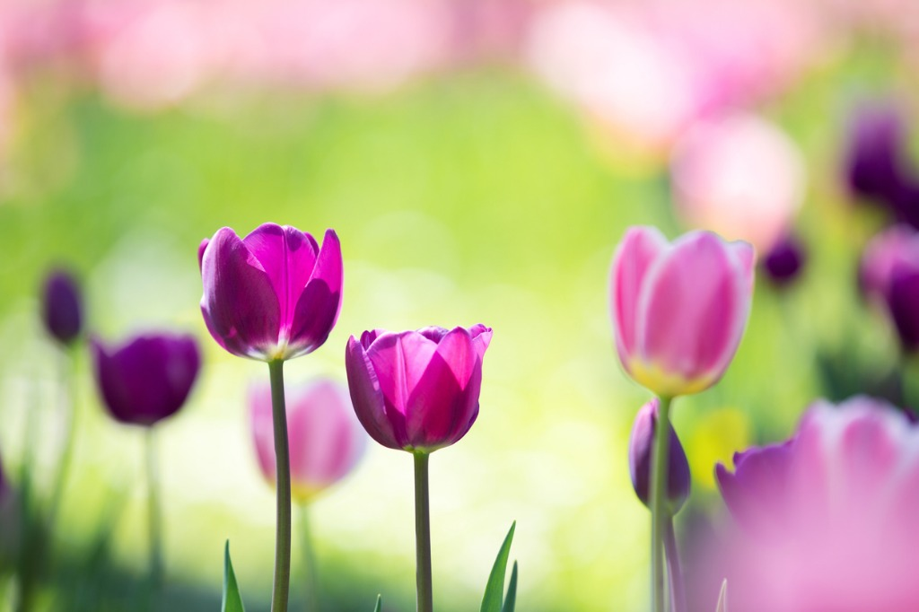 Spring Flower Photography Tips 1 image