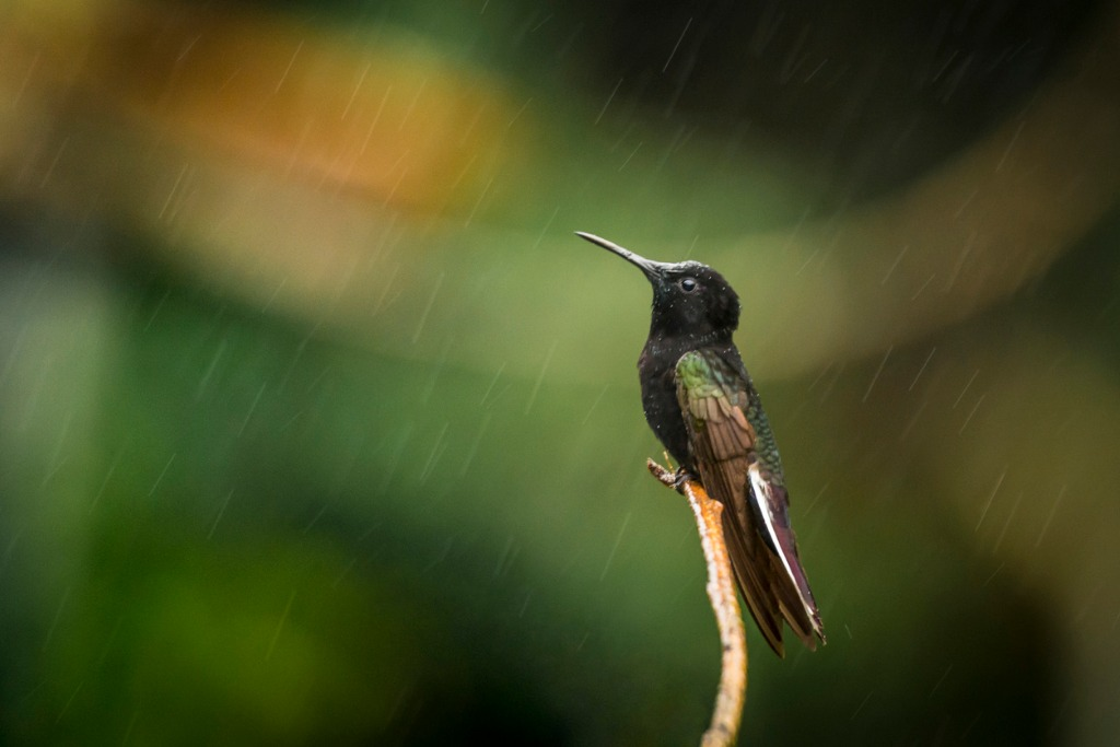 bad weather wildlife photography tip 1 image