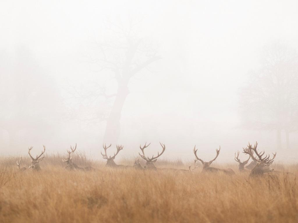 wildlife photography tips 2 image