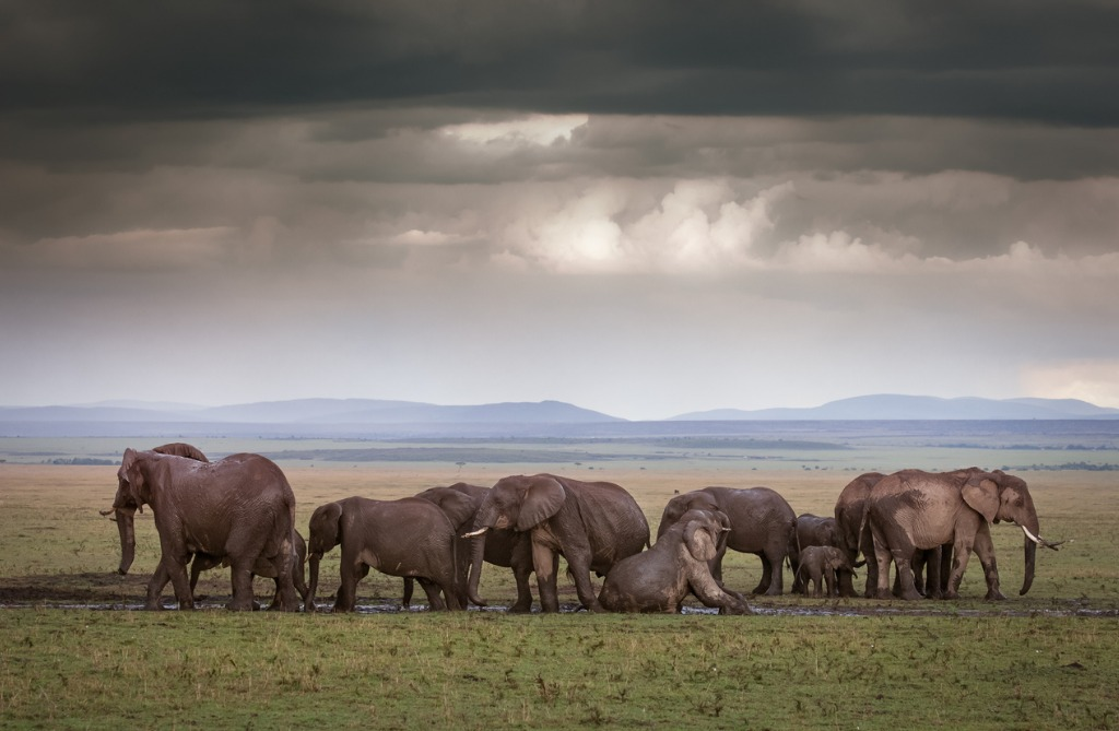 wildlife photography tips 3 image