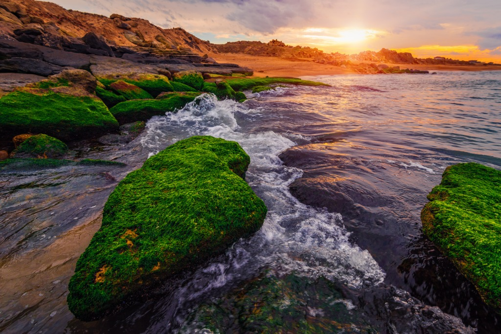 colorful sunset on the sea shore with green algae picture id1131543490 image