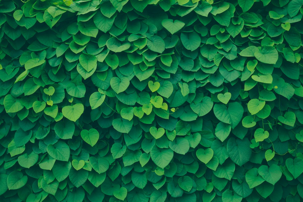 leafy green background picture id1050730168 image