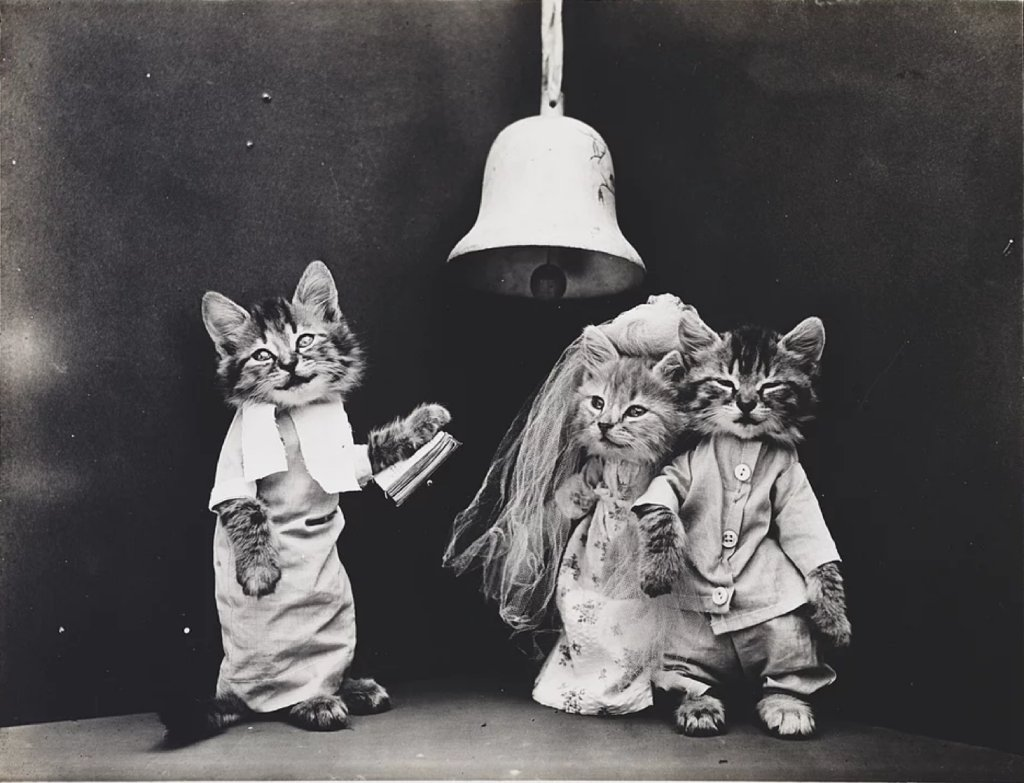 cute cat photos image