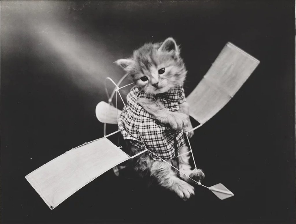 first animal in space image