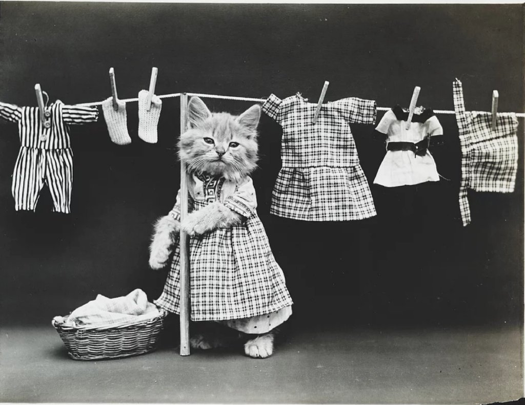 vintage cat photo image