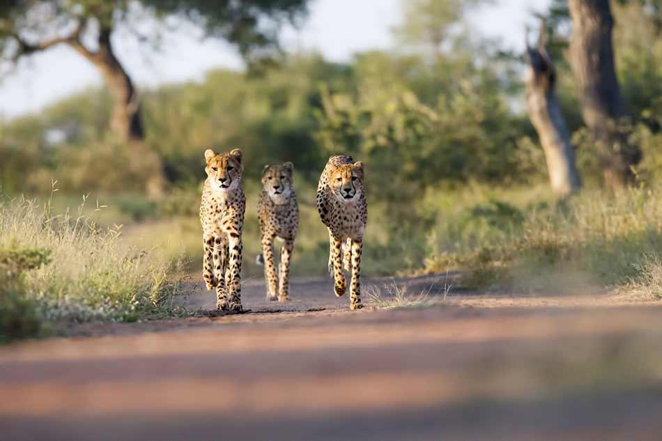 incredible safari moments image