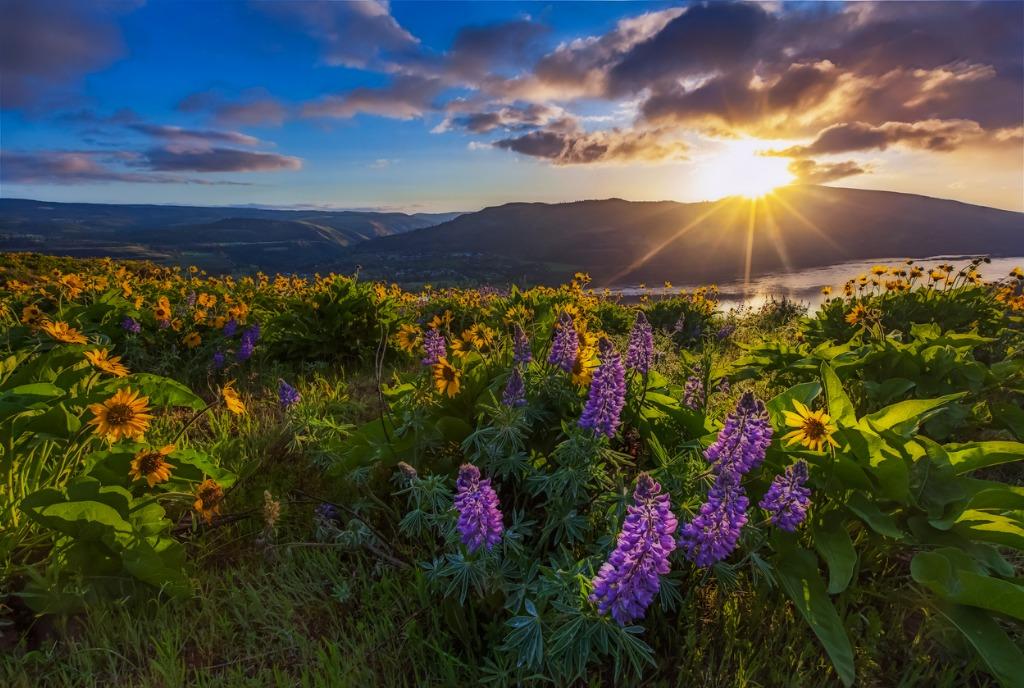 wildflower fine art photography 3 image