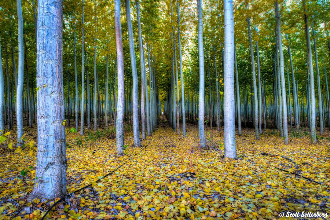TreeFarm 1080x720x150 image