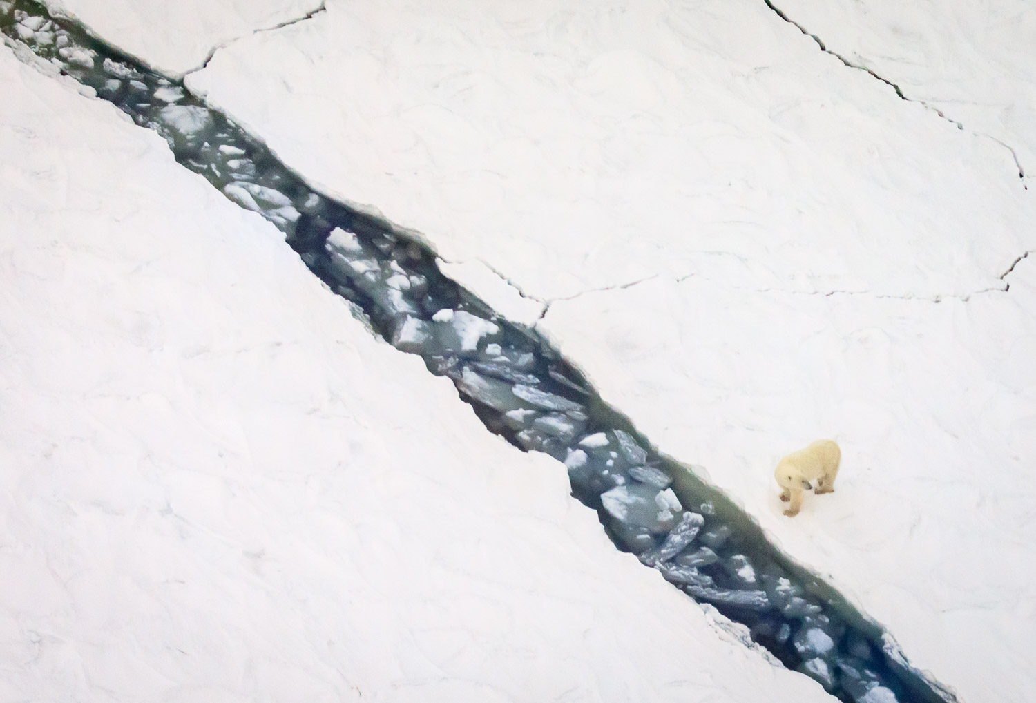 art of seeing polar bears 2 image