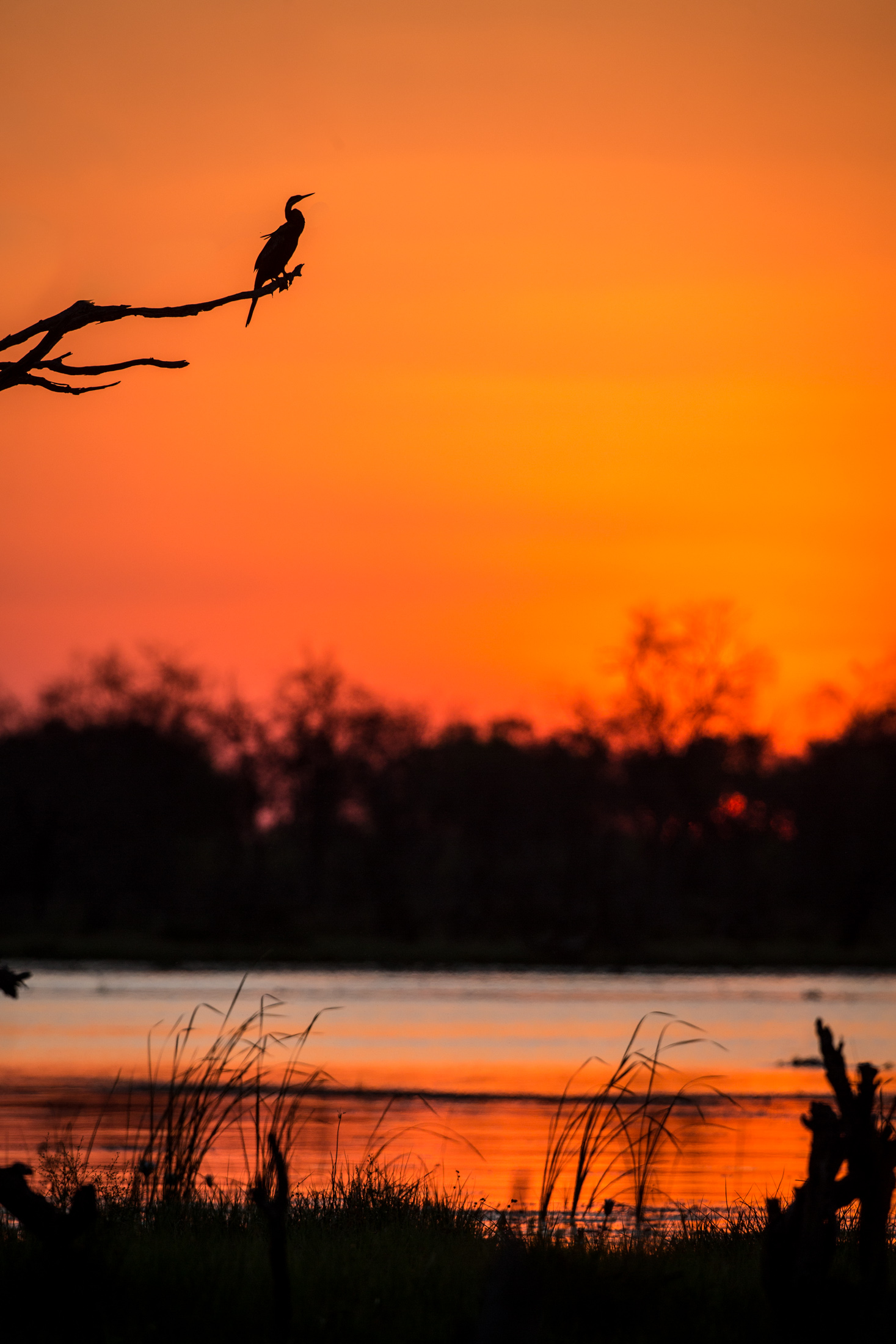 botswana is known for okavango image