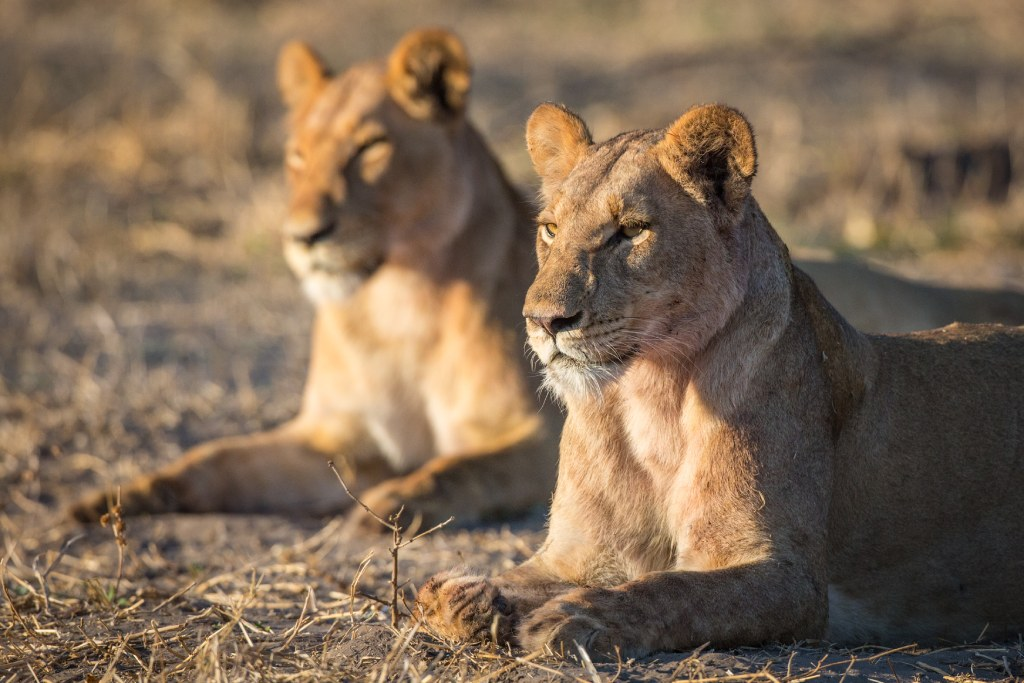 photography tours in botswana image