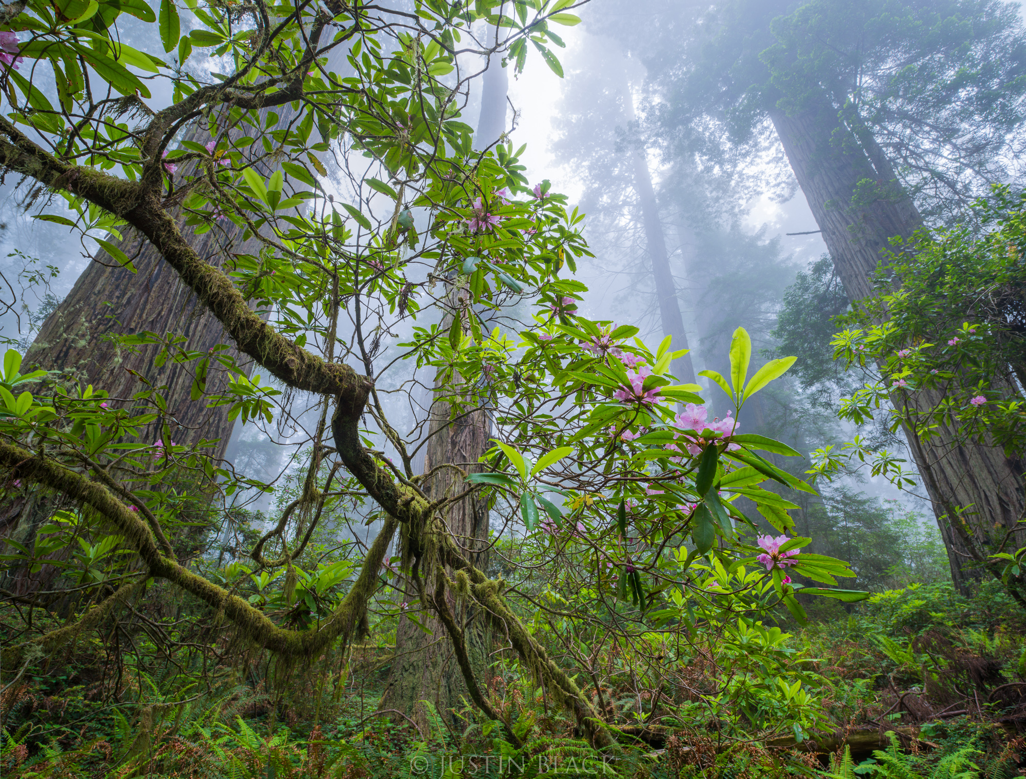 what to photograph in the redwood coast 1 image